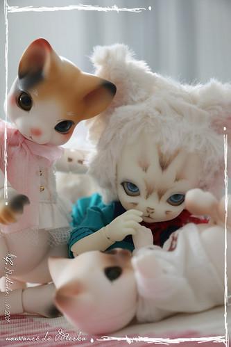 ✰ Ma famille de kitsune (p. 20) - Page 12 35469449112_690e534395