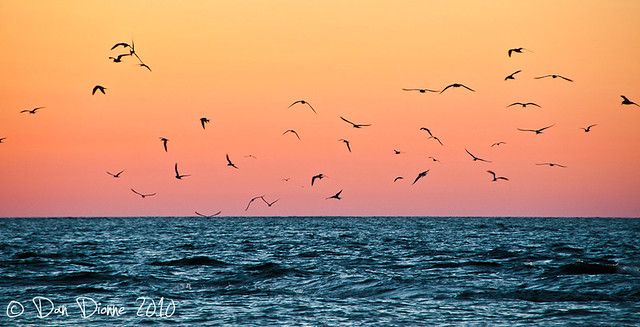 Terns at Dawn