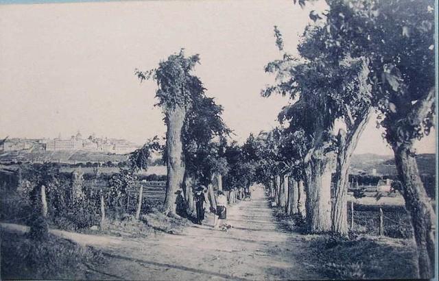 Antigua plantación de árboles en la Vega Baja