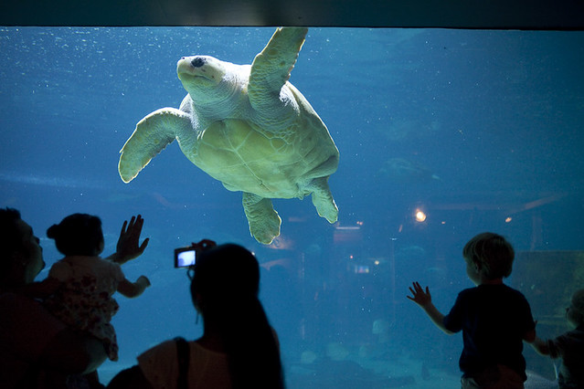 Sea Turtle At Adventure Aquarium In Camden Nj Flickr