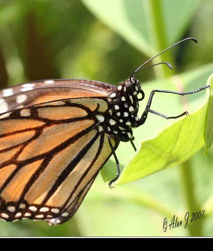 ny newyork canon butterfly adirondacks 7d upstatenewyork saranaclake paulsmithscollege 100mmmacrof28lisusm