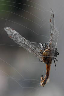 The end of a Dragonfly...