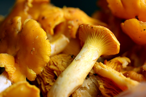 Chanterelles close