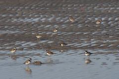 20100828 - Crosby Landing Birds