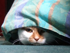 Hiding cat by Lebatihem