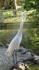 crane/heron