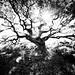 Tree Line 1 by Rob.Hudson