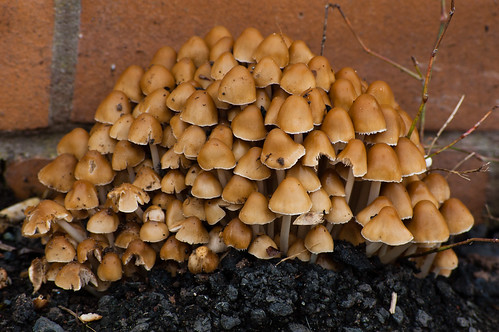 Clump of mushrooms