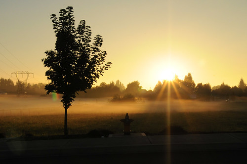 morning fog vancouver sunrise washington pacific northwest