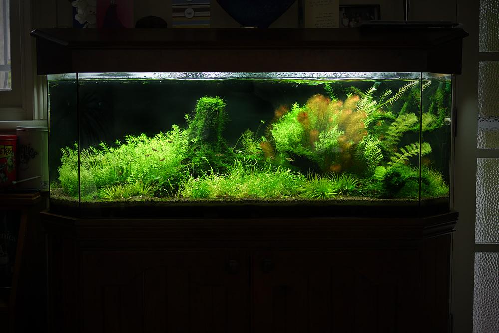 Albert namatjira inspired australian aquarium landscape Aquarium landscape