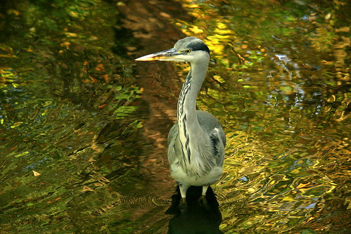 Begegnung am Morgen Good Morning Heron