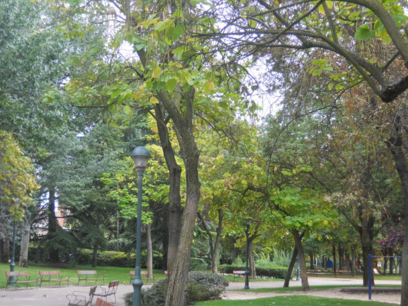 Catalpas en otoño 3
