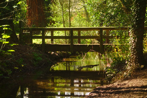 wales gwent newport green water reflection reflecting trees ivy shadows landscape tredegarhouse country park