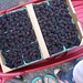 a flat of marionberries