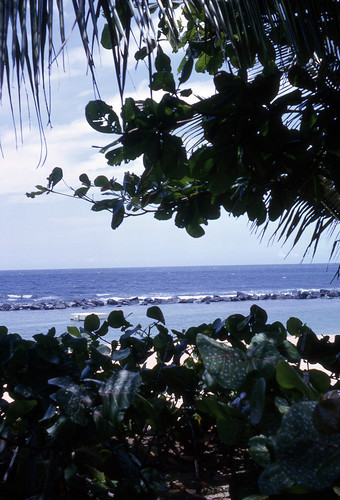 ocean sea vacation sky green beach water hotel puertorico horizon resort foliage palmtrees greenery hyatt kodachrome oceanview 1964 dorado 35mmslide doradobeach doradobeachhotel slide15 hyattdoradobeachhotel hyattdorado hyattdoradobeachresortandcountryclub processedjune1964