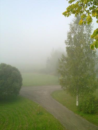 tree fog finland lawn keuruu isokirja