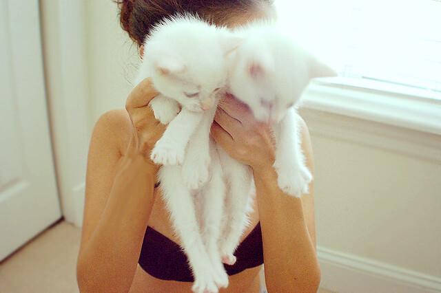 блондинка с котенком фото #10