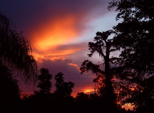 trees sunset color nature beauty pinetree clouds backyard unitedstates spectrum florida silhouettes 45 sunsetlight inmybackyard cloudscape summerbeauty sunsetwednesday coralspringsflorida wednesdaysunset quartasunset quartasunsetgroup summerbeauty~quartasunset45
