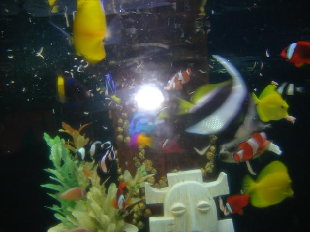 Mall Of America Aquarium 41 Flickr Photo Sharing