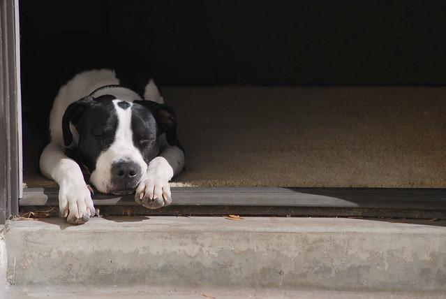 Wheaton West Rescue Dogs