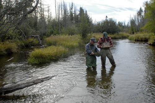 brown mi michigan trout founders ausable brooktrout ausableriver dowiepics unlimitedmasongriffith trouttutrout