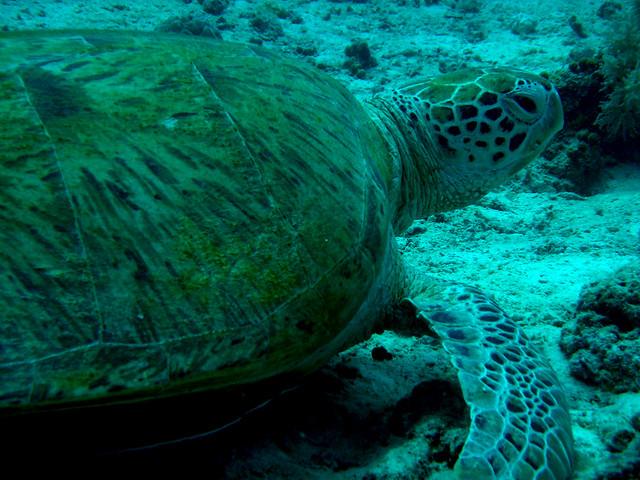 s海龜05