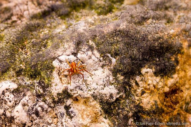 Orange spider on rock