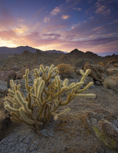 california county sunset cactus rocks desert riverside palm cholla