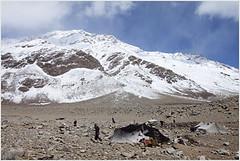 life @ 15,500 ft., rupshu valley