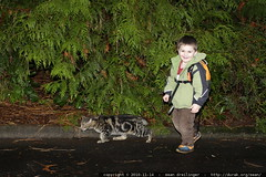 walking his cat?