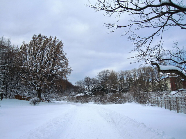 The plowed path past the Cranford Rose Garden. Photo by Rebecca Bullene.