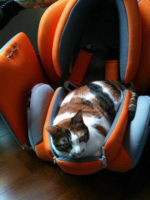 my cat in car seat flickr photo sharing. Black Bedroom Furniture Sets. Home Design Ideas