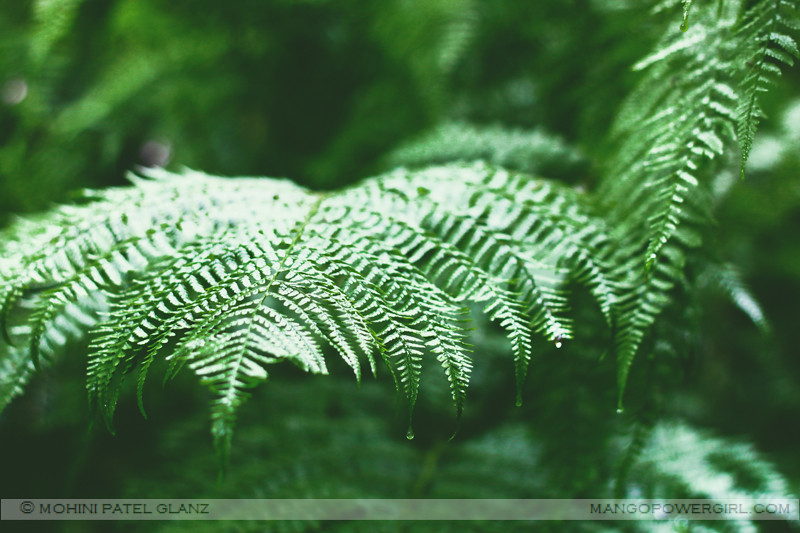 rain on ferns