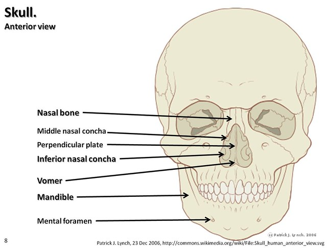 skull diagram anterior view with labels part 3 axial skeleton visual atlas page 8 flickr. Black Bedroom Furniture Sets. Home Design Ideas