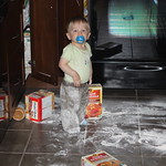 2010-09-01 - Yes Dad, Mom left TWO open boxes of pancake mix in my cupboard where I could reach them