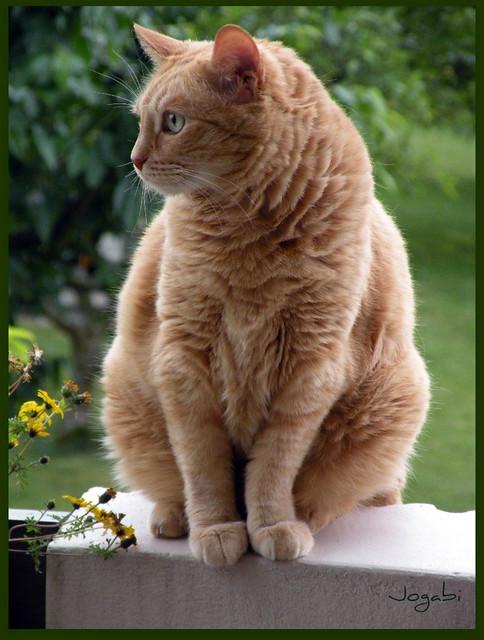 Blonde Cat Nude Photos 52