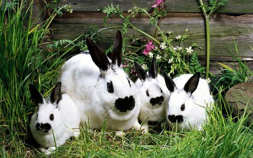 [フリー画像素材] 動物 1, 哺乳類, 兎・ウサギ ID:201112161000