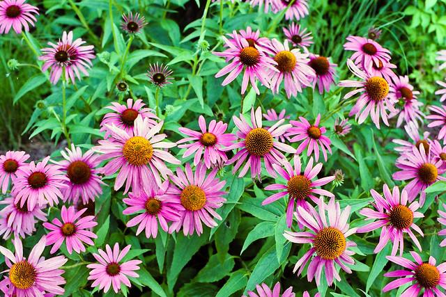 Les fleurs, version Elan 7