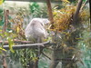 sf zoo 9-19-10 106