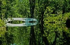 The Long White Bridge at Magnolia Gardens