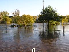 natural disaster, flood, water, river, bayou, reflection, disaster,
