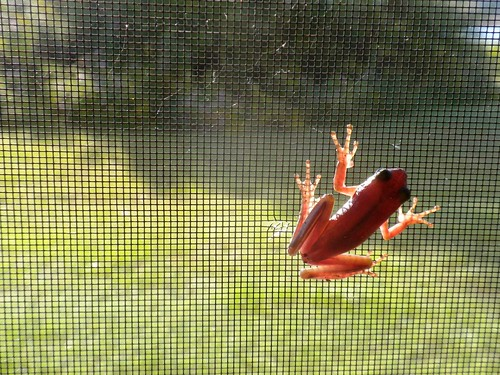 red green feet window wet foot back toes skin head fingers leg amphibian screen frog thigh xray