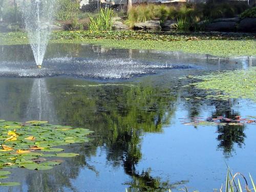 Fountain in garden pond