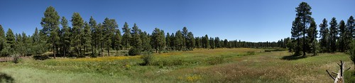 panorama arizona pinetoplakeside pinetop pinetoparizona whitemountains bigspringsenvironmentalstudyarea bigsprings springs wetlands meadows hugin riparian riparianzone riparianarea riparianhabitat