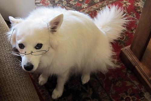 Librarian Trixie