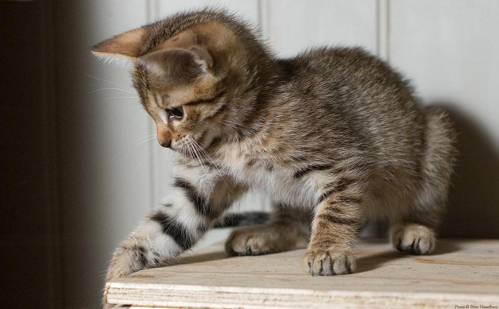 Dynamic Kitten 1