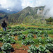 Haiti: USAID WINNER agriculture projects