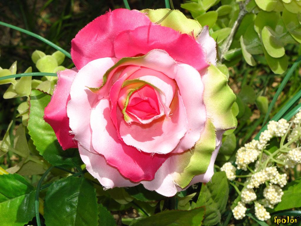 Flor de plastico flickr photo sharing - Flores de plastico ...
