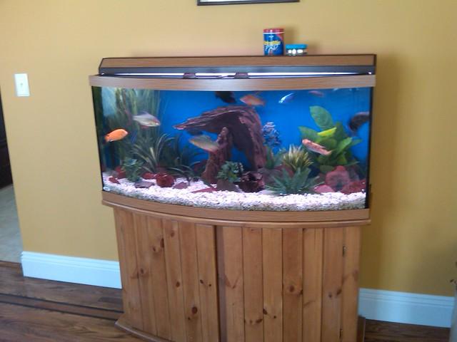 72 gallon bowfront aquarium flickr photo sharing for Bow fish tank
