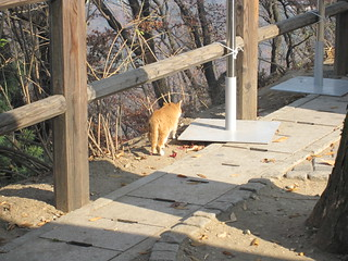 Cat, North Seoul Tower